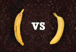 Banana vs Plantains: What's the Difference?