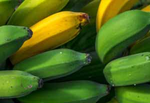 Plantain 101: What Is A Plantain?
